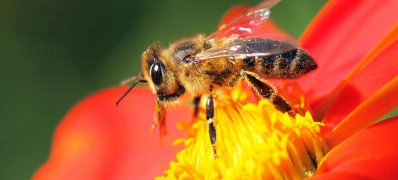 Bee-garden-visit---lets-crete