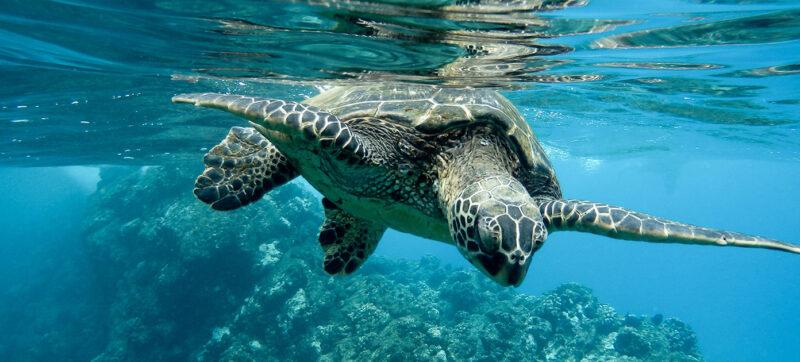 snorkelling-letscrete