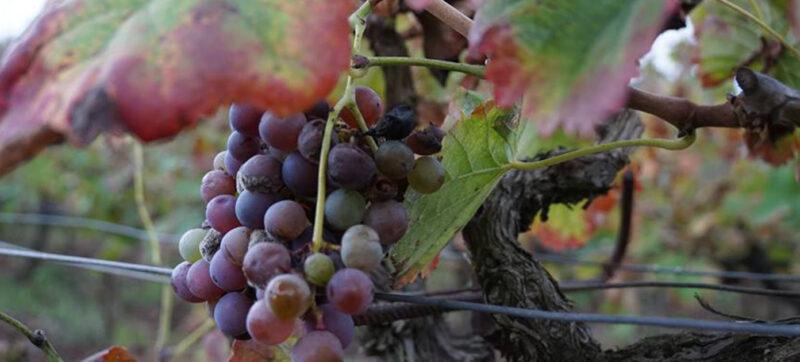 winey-letscrete